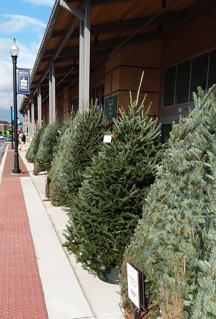 Yule Whole Foods Trees