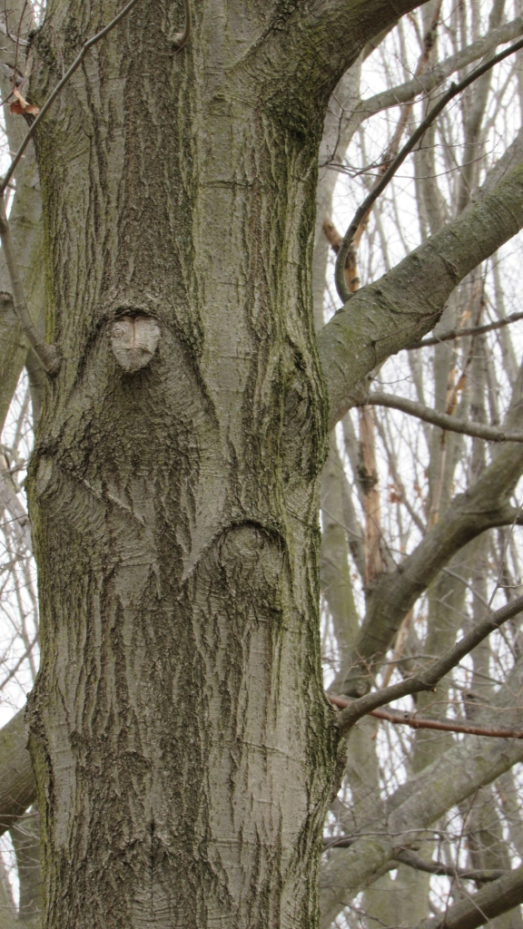 Grumpy tree spirit - livingbewitchingly.com
