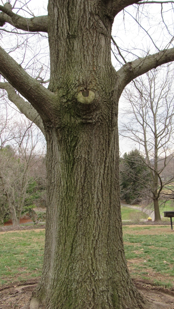 A tree spirit with eyes - copyright © livingbewitchingly.com