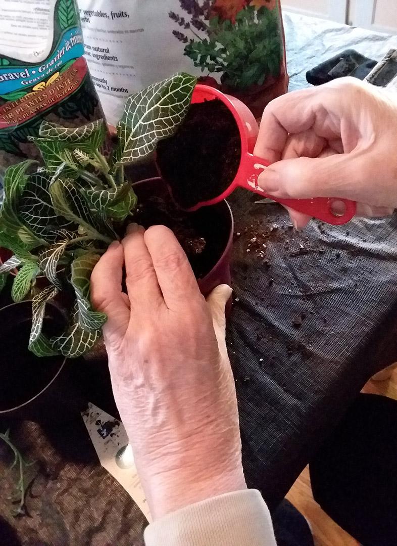 Potting Houseplants