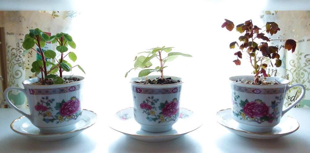 A Garden Goddess Window: Indoor Gardening to Heal the Winter Blues